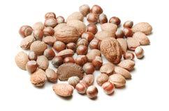 Грецкий орех и фундуки и на белой предпосылке Стоковое фото RF
