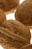 грецкий орех предпосылки Стоковая Фотография