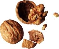 Грецкий орех, стержень грецкого ореха, части грецкого ореха Стоковая Фотография RF