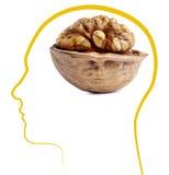 грецкий орех хороших здоровий мозга Стоковое Изображение