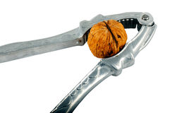 грецкий орех Щелкунчика Стоковые Фотографии RF