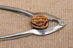 грецкий орех Щелкунчика Стоковое фото RF