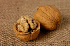грецкий орех Стоковое фото RF