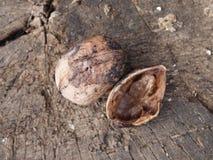 Грецкий орех Стоковые Фото