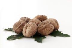 Грецкий орех Стоковое Фото