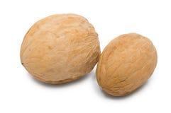 2 грецкого ореха в раковине Стоковые Фотографии RF