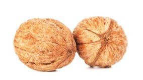 2 грецкого ореха в раковине Стоковые Фото