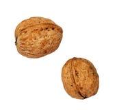 2 грецкого ореха Стоковое Изображение RF