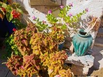 Греческая деревня Крита патио Стоковая Фотография
