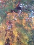 Греческие ветви Стоковое Изображение RF