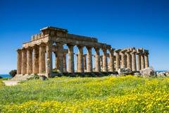 Греческий висок на Selinunte Стоковое Изображение