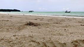 Гречиха затворницы идя вдоль пляжа акции видеоматериалы