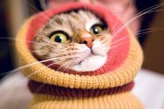 Грелки ноги смешного кота нося стоковые фотографии rf