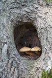 2 гриба в отверстии Стоковая Фотография