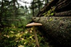 2 гриба в древесинах Стоковая Фотография