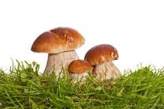 3 гриба изолированного на белой предпосылке Стоковые Изображения RF