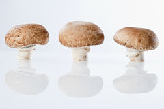 3 гриба кнопки в ряд Стоковое Фото