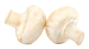 2 гриба на белой предпосылке Стоковая Фотография