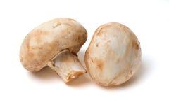 2 гриба на белой предпосылке Стоковые Фото