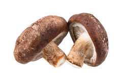 2 гриба шиитаке изолированного на белизне Стоковое Изображение RF