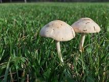 2 гриба Стоковое фото RF