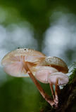 4 гриба Стоковое Изображение RF