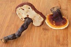 2 гриба lucidum Ganoderma Стоковые Изображения RF