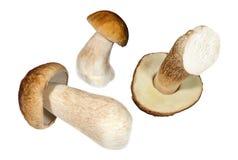 3 гриба porcini на белой предпосылке Стоковое Изображение RF