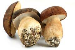 3 гриба porcini Стоковые Изображения