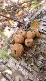 Грибки в лесе Стоковое фото RF