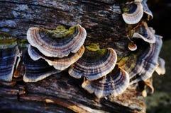 Грибки дерева на журнале Стоковое Фото
