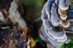 Грибки дерева на журнале Стоковые Фото