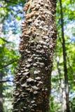 Грибки на дереве Стоковое Изображение RF
