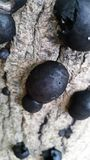Грибки черного леса Стоковое фото RF