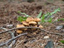 грибки стоковые фото