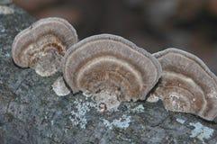 грибки Стоковая Фотография