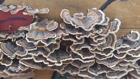 грибки Стоковые Изображения RF