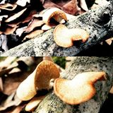 грибки Стоковые Изображения