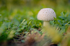 грибки Стоковые Фотографии RF