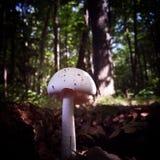 грибки Стоковое Фото