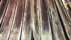 грибная белизна Стоковая Фотография RF