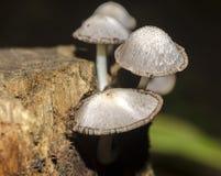 грибная древесина Стоковая Фотография RF