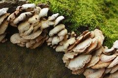грибной вал Стоковое Изображение