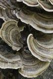 грибной вал Стоковое Изображение RF