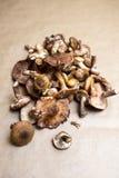 грибной мед Стоковые Изображения RF