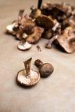 грибной мед Стоковая Фотография