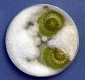 грибной расти Стоковые Изображения RF