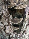 грибной растущий вал пня Стоковое Изображение RF