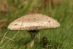 Грибные гриб или toadstool Стоковое фото RF