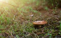 Грибок в зеленом лесе Стоковая Фотография RF